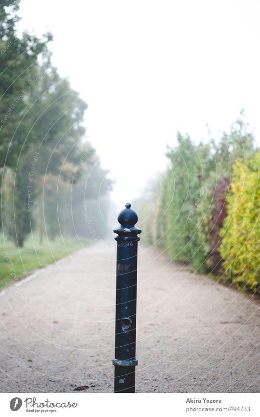 Wegteiler Natur Herbst Nebel Baum Sträucher Wiese kalt gelb grau grün rot schwarz Einsamkeit Vergänglichkeit Wege & Pfade Farbfoto Gedeckte Farben Außenaufnahme