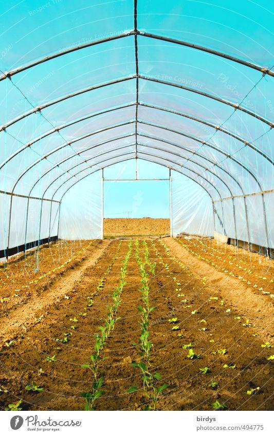 Sommerhitze Ernährung Bioprodukte Gärtnerei Landwirtschaft Forstwirtschaft Wolkenloser Himmel Horizont Sonne Frühling Schönes Wetter Wärme Pflanze Nutzpflanze