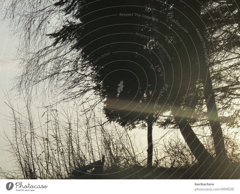 Natur im Scherenschnitt Himmel Sonnenlicht Baum Gras Sträucher Waldrand Bank schwarz weiß Stimmung Romantik ruhig Erholung Frieden Gefühle Sinnesorgane träumen