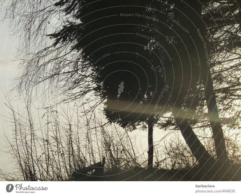 Natur im Scherenschnitt Himmel weiß Baum Erholung ruhig schwarz Umwelt Gefühle Gras Stimmung träumen Zufriedenheit Sträucher Romantik Bank