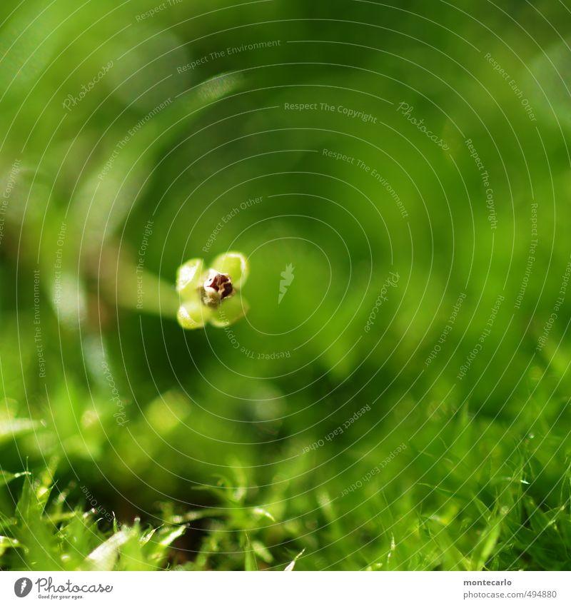 Parteifoto Umwelt Natur Pflanze Herbst Gras Sträucher Blatt Blüte Grünpflanze Wildpflanze dünn authentisch einfach frisch klein wild weich grün Farbfoto