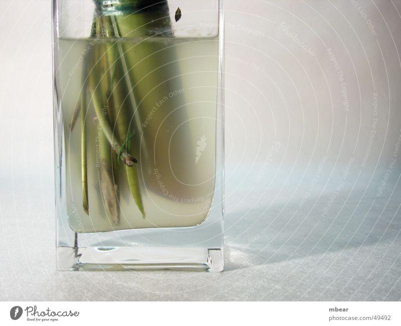 Blumenwasser Vase grün trüb Pflanze Aquarium durchsichtig Wasser flowers Schatten Stengel welk