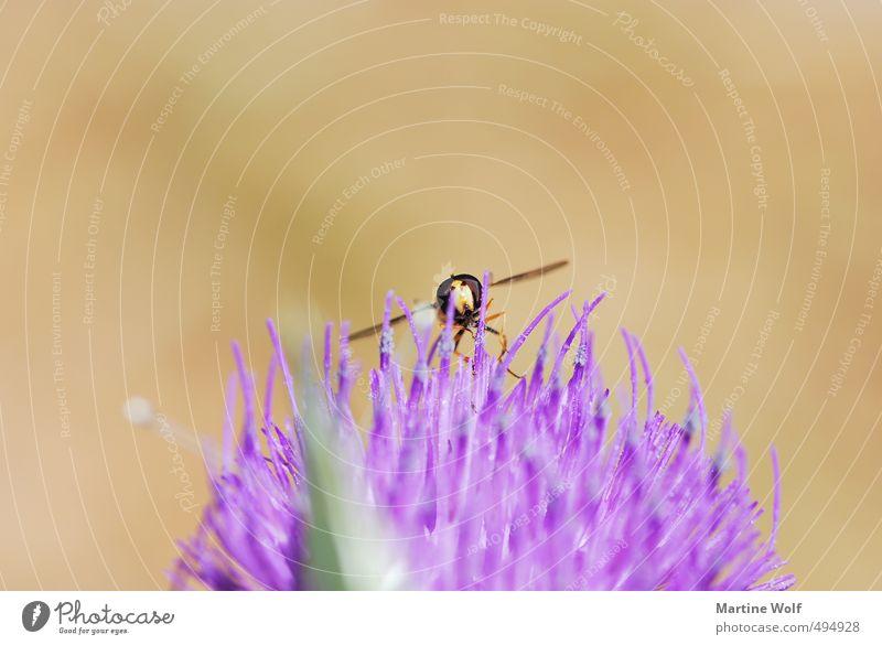 Landung in unwegsamem Gelände Natur Tier fliegen Europa Italien Biene Landen Wespen bestäuben Kalabrien