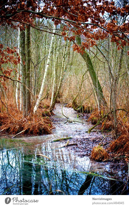 HerbstSumpf Natur blau grün Wasser Pflanze Baum rot Einsamkeit Landschaft Wald Gras natürlich träumen Stimmung braun