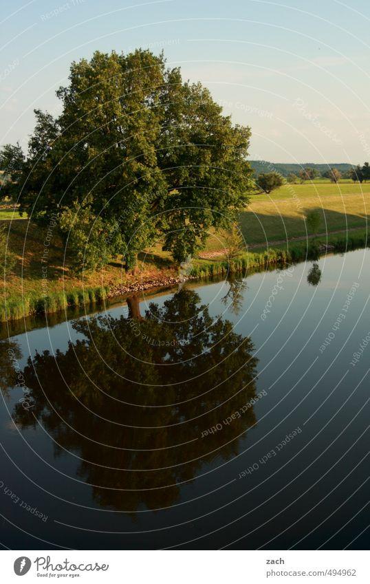 Spiegelungen | oben und unten Sommer Sommerurlaub Umwelt Natur Landschaft Wasser Himmel Frühling Schönes Wetter Pflanze Baum Gras Wiese Feld Küste Seeufer
