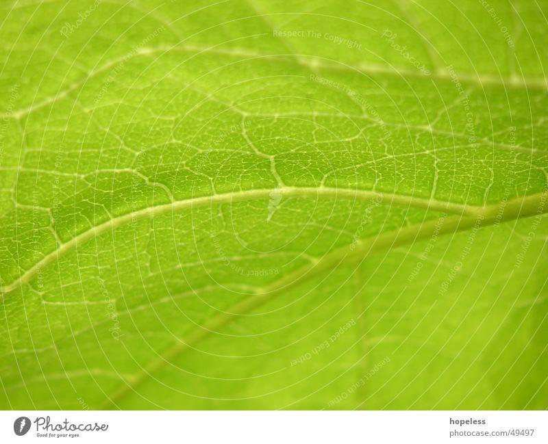 Lebenslinien? Blatt Pflanze grün Natur