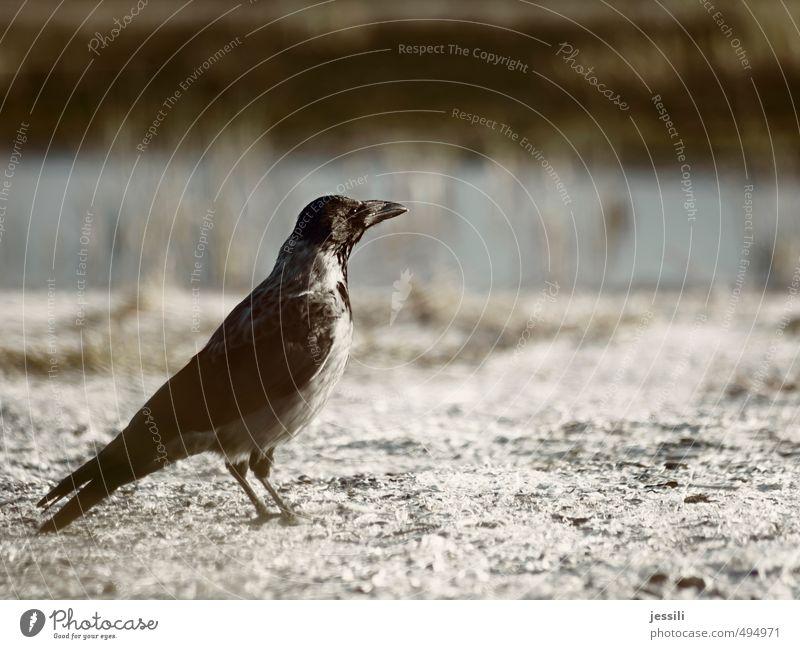 Obacht Tier Tod Denken träumen Vogel Wildtier warten stehen Zukunft beobachten einfach planen Mut Wachsamkeit ernst klug