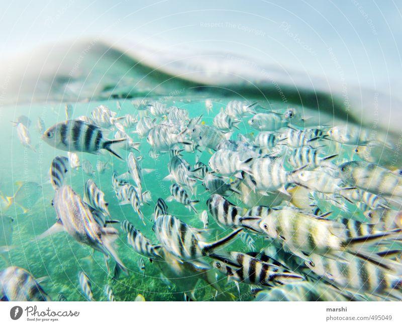 zwei Welten Natur blau Wasser Pflanze Sommer Meer Landschaft Tier Küste Schwimmen & Baden Wildtier Tiergruppe Fisch Wassersport Schwarm Riff