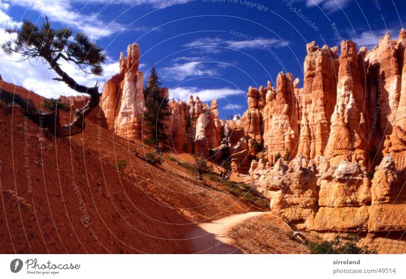 Bryce Canyon Paunsaugunt Plateau Sandstein Erosion Wolken eigenwillig Baum Nordamerika Utah Nationalpark trocken Skulptur Wildnis Außenaufnahme analog Dia