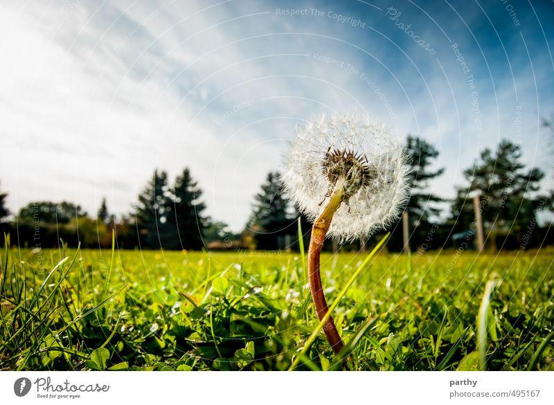 Pustekuchen Natur Pflanze Erde Himmel Wolken Schönes Wetter Baum Blume Gras Blüte Garten Wiese Wald einfach frisch nah blau braun grün Farbe Freiheit Umwelt