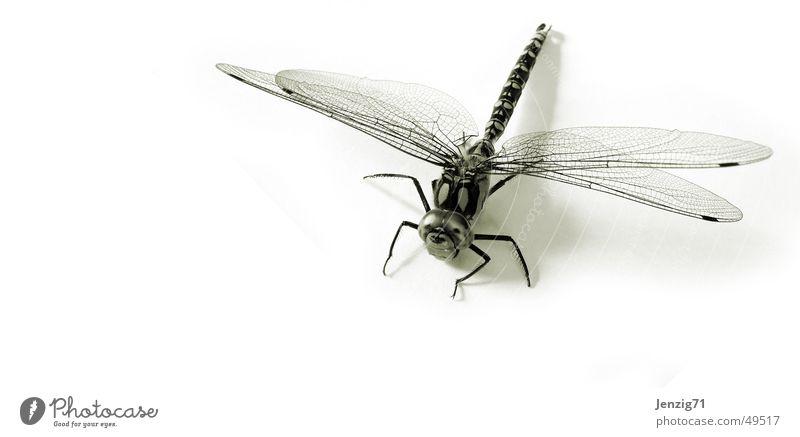 Mosaikjungfer. fliegen Flügel Insekt Makroaufnahme Libelle Mosaikjungfer