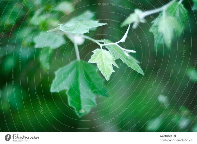 Blattgrün Natur Pflanze Baum dunkel Umwelt natürlich