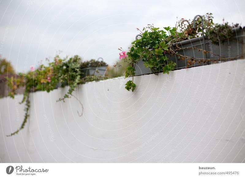 150 | . Garten Gartenarbeit Pflanze Blume Blatt Blüte Pelargonie Industrieanlage Park Platz Mauer Wand Wege & Pfade Stein Beton Metall Blühend verblüht