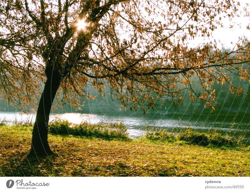 An der Saale Wasser Himmel Baum Sonne Herbst Wiese Landschaft Fluss Lagerhalle