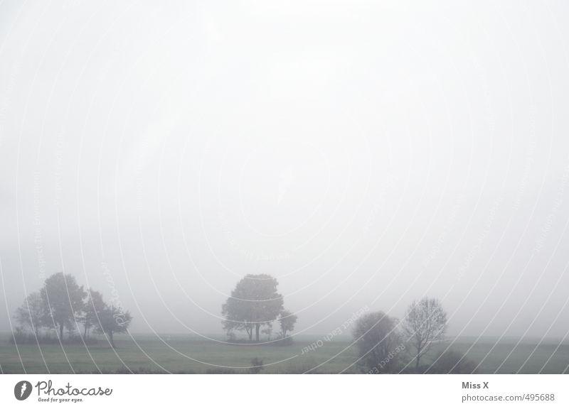 Schönes Wetter, gell?! Umwelt Natur Landschaft Herbst Winter schlechtes Wetter Unwetter Nebel Regen Baum Wiese Feld kalt trist grau Stimmung Traurigkeit Sorge
