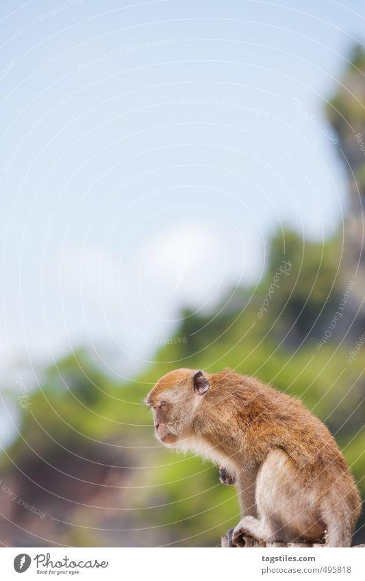 PHRA NANG - BEACH OF THE APES Natur Ferien & Urlaub & Reisen Strand Reisefotografie Freiheit wild Wildtier Asien Postkarte Paradies himmlisch Säugetier