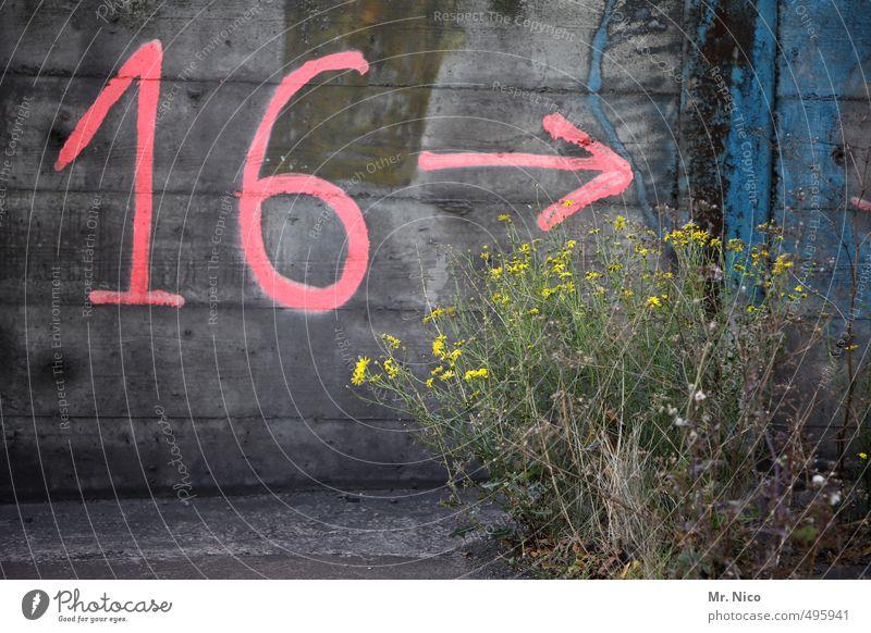 16 --> Umwelt Pflanze Sträucher Mauer Wand Fassade rosa Ziffern & Zahlen Pfeil Unkraut richtungweisend Betonwand Betonmauer Industrielandschaft Graffiti