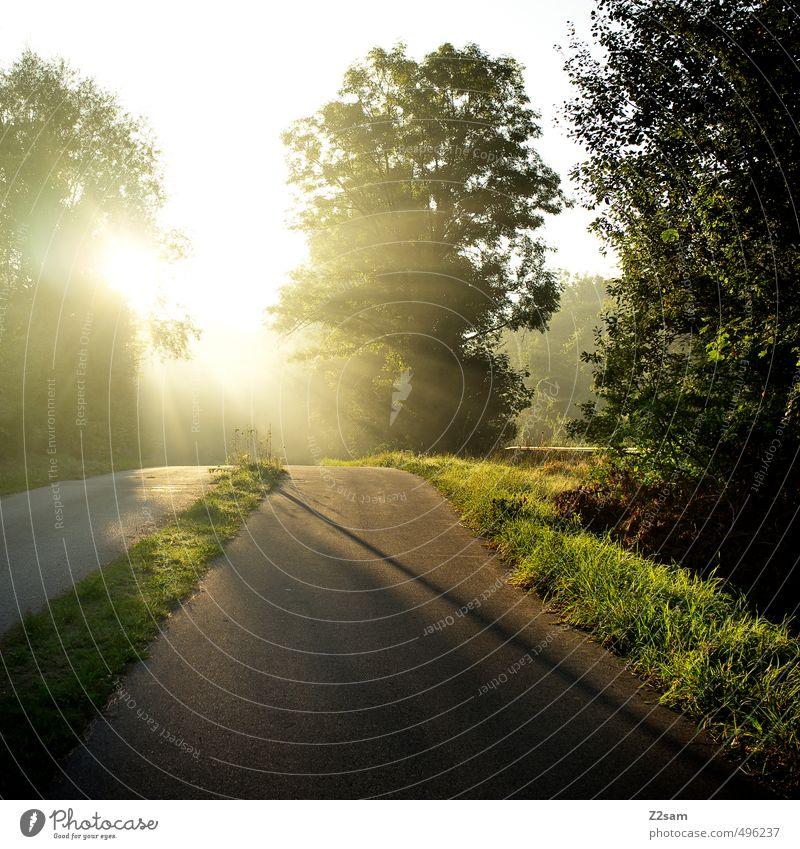 ins Licht! Natur Sommer Sonne Baum Einsamkeit Landschaft ruhig Umwelt Wärme Straße Wiese Wege & Pfade natürlich Idylle Sträucher Perspektive