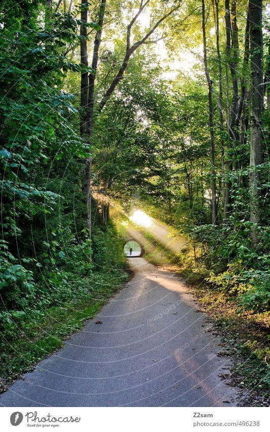 ..ins Licht! Mensch Natur Sommer Baum Erholung Einsamkeit Landschaft ruhig Wald Umwelt Herbst Wege & Pfade natürlich Stimmung Idylle Schönes Wetter