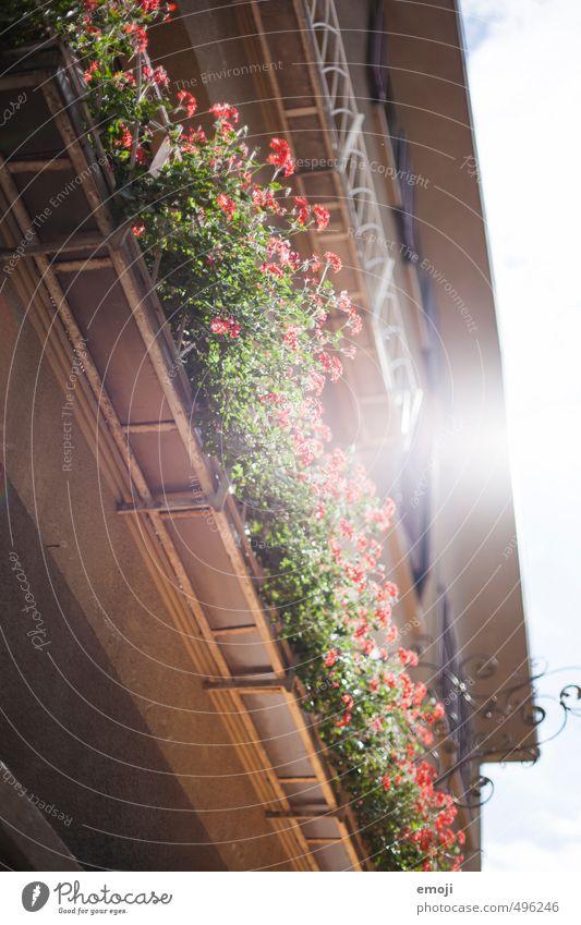 retro Umwelt Natur Pflanze Sommer Blume Topfpflanze Pelargonie Haus grün rot Farbfoto Außenaufnahme Menschenleer Tag Sonnenlicht Sonnenstrahlen Gegenlicht