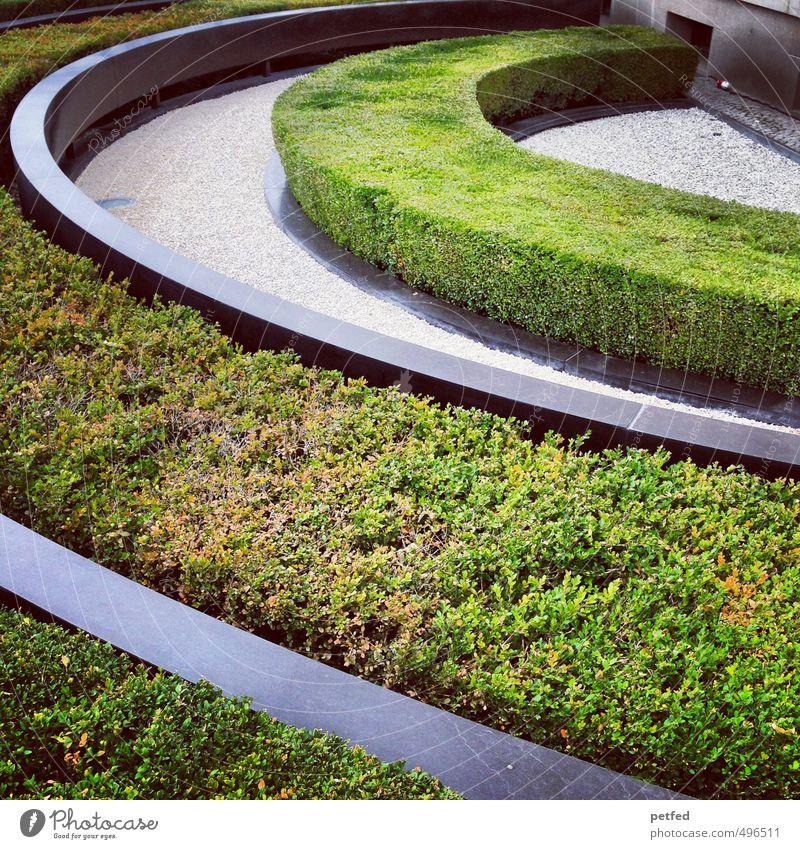 Wandel im Garten grün Sonne Linie Ordnung Sträucher rund Kurve Hecke