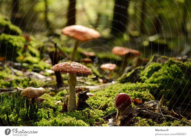 Herbstzeit-Pilze Natur Sonne Landschaft ruhig Wald