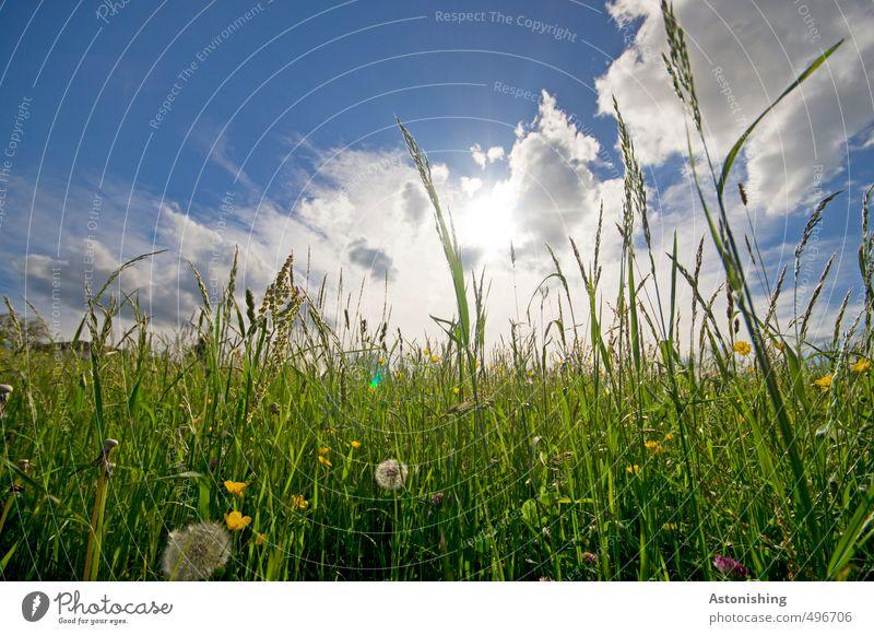 Wiese Umwelt Natur Landschaft Pflanze Urelemente Luft Himmel Wolken Horizont Sonne Sonnenlicht Sommer Wetter Schönes Wetter Wärme Blume Gras Blatt Blüte