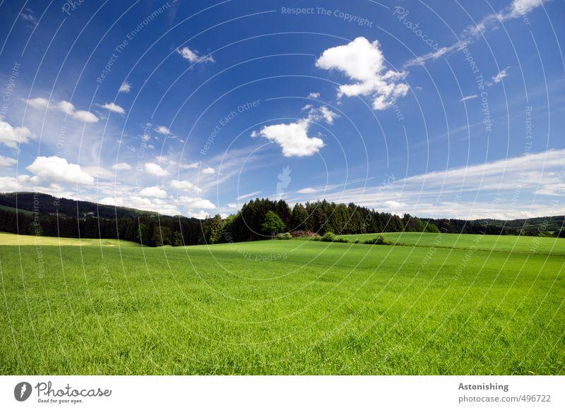 Auenland? II Umwelt Natur Landschaft Pflanze Luft Himmel Wolken Horizont Sommer Wetter Schönes Wetter Wärme Baum Gras Sträucher Wiese Feld Wald Hügel Hügelland