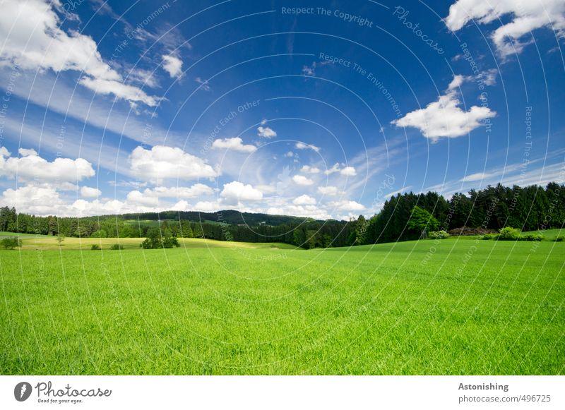 Auenland? Umwelt Natur Landschaft Tier Luft Himmel Wolken Horizont Sommer Wetter Schönes Wetter Wärme Pflanze Baum Gras Sträucher Grünpflanze Wiese Feld Wald