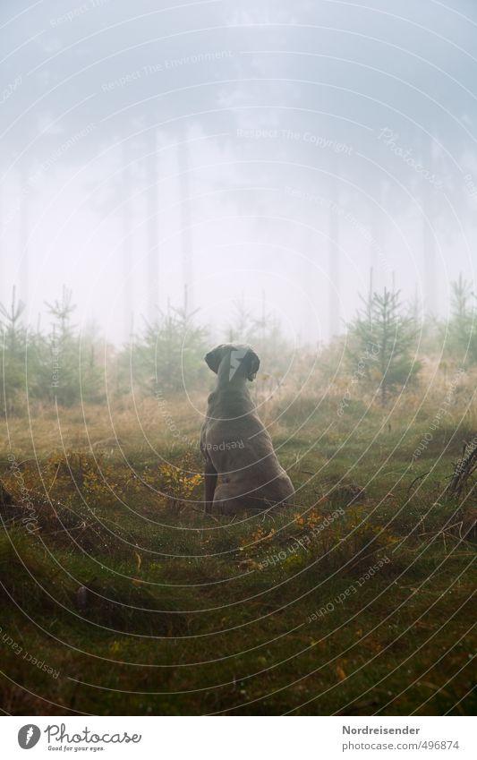 Instinkt III Hund Pflanze Baum ruhig Tier Wald Leben Wege & Pfade Regen Nebel wandern nass ästhetisch Urelemente beobachten Romantik