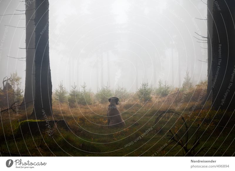 Instinkt II Hund Pflanze Baum ruhig Tier Wald dunkel Leben Wege & Pfade Regen Nebel wandern nass ästhetisch Urelemente beobachten