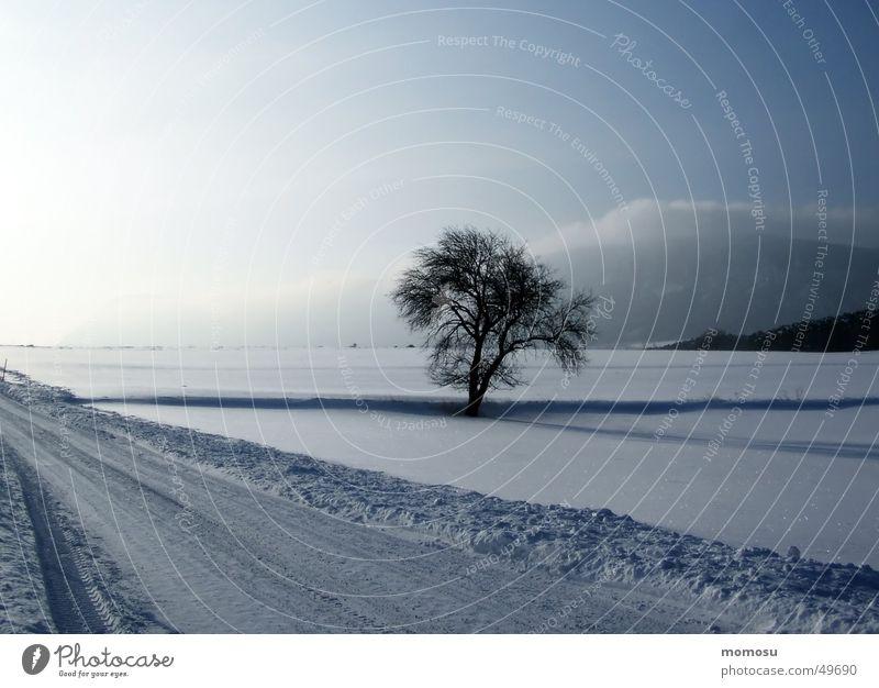 ...allein im Schnee Himmel Baum Sonne Winter Wolken Straße Österreich