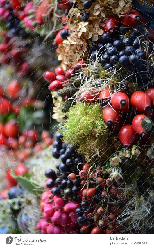 Herbstfrüchte Pflanze Moos Nutzpflanze Beeren Frucht Hagebutten Dekoration & Verzierung Türkranz ästhetisch frisch schön mehrfarbig Stimmung Freude Farbe