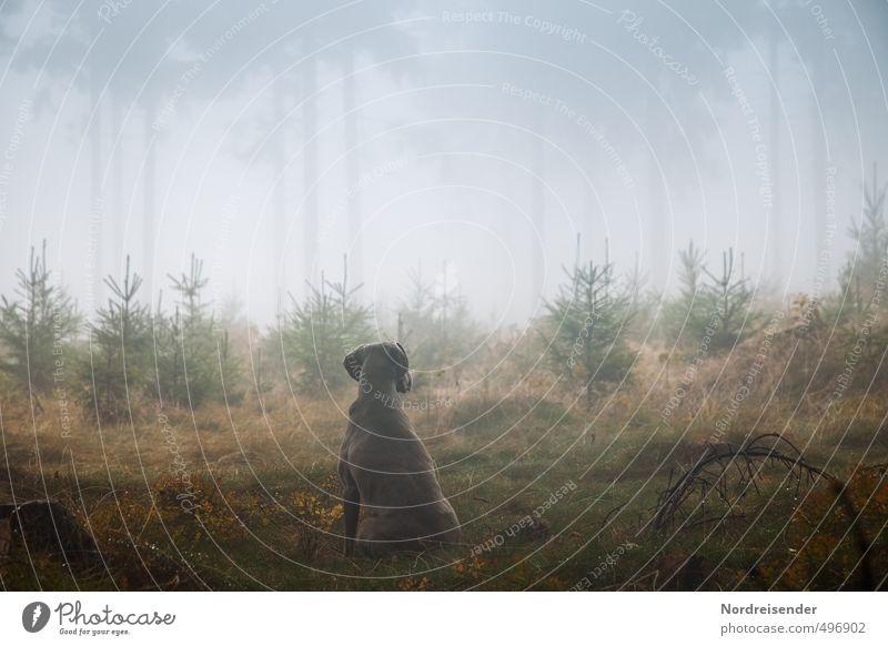 Instinkt Leben Sinnesorgane ruhig Jagd wandern Landwirtschaft Forstwirtschaft Pflanze Tier Urelemente Nebel Regen Baum Wald Wege & Pfade Hund beobachten