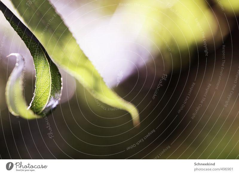 Naturformen schön grün Pflanze Sommer Sonne Blatt Tier Wald Umwelt Wiese Herbst Garten Park Sträucher Schönes Wetter