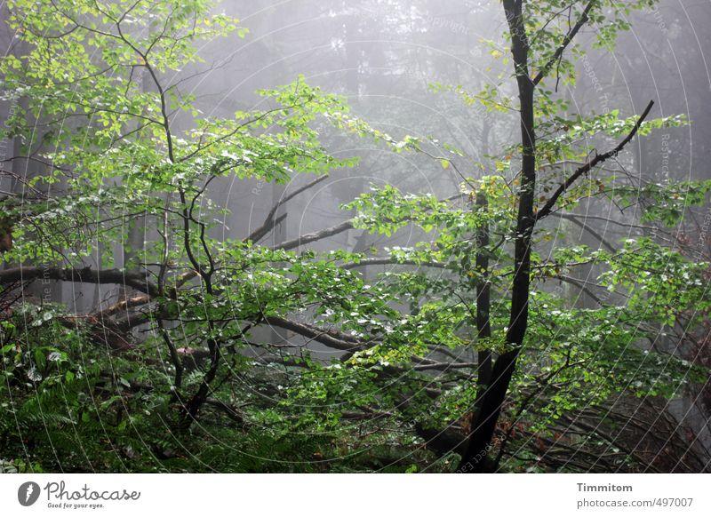 Doch hoffen? Umwelt Natur Pflanze Herbst schlechtes Wetter Nebel Regen Baum Wald Ast Tod Holz dunkel glänzend nass natürlich grün schwarz Gefühle Leben