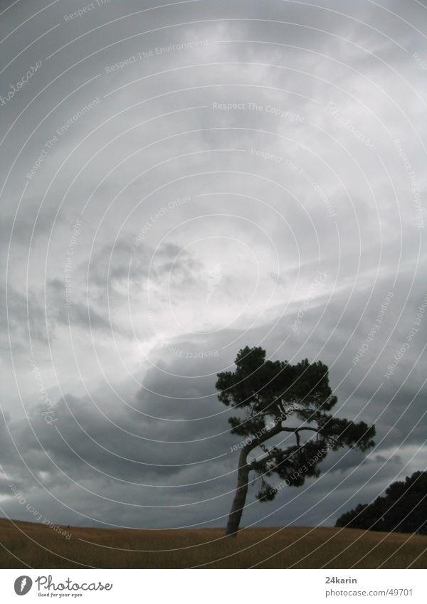 Tree Baum dunkel Herbst Wolken tree Landschaft