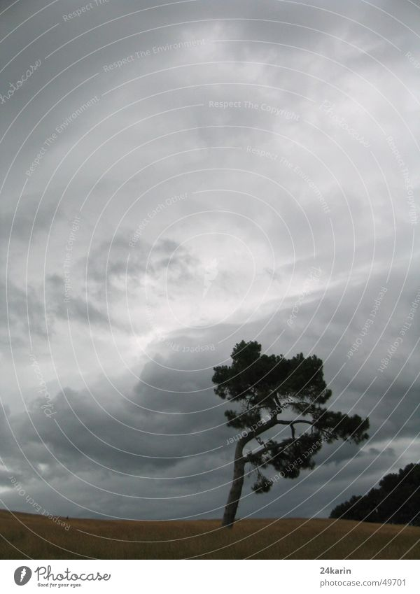 Tree Baum Wolken dunkel Herbst Landschaft