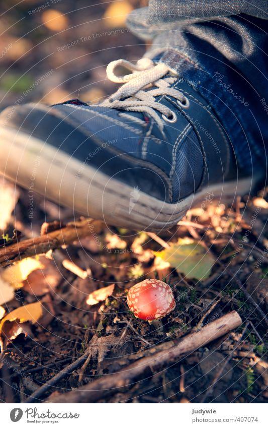 Achtung!... Der will noch wachsen Natur Pflanze Wald Umwelt Leben Herbst Wege & Pfade gehen Erde Schuhe wandern Sträucher Schönes Wetter bedrohlich Klettern