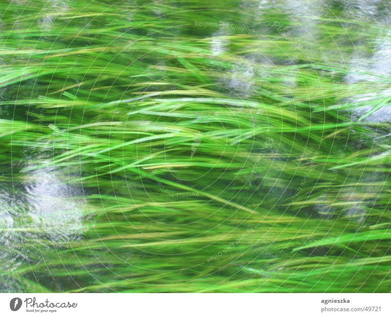 alles fliesst Wasser grün Gras Bewegung Fluss Unterwasserpflanze Bach fließen bewachsen grasgrün Seegras