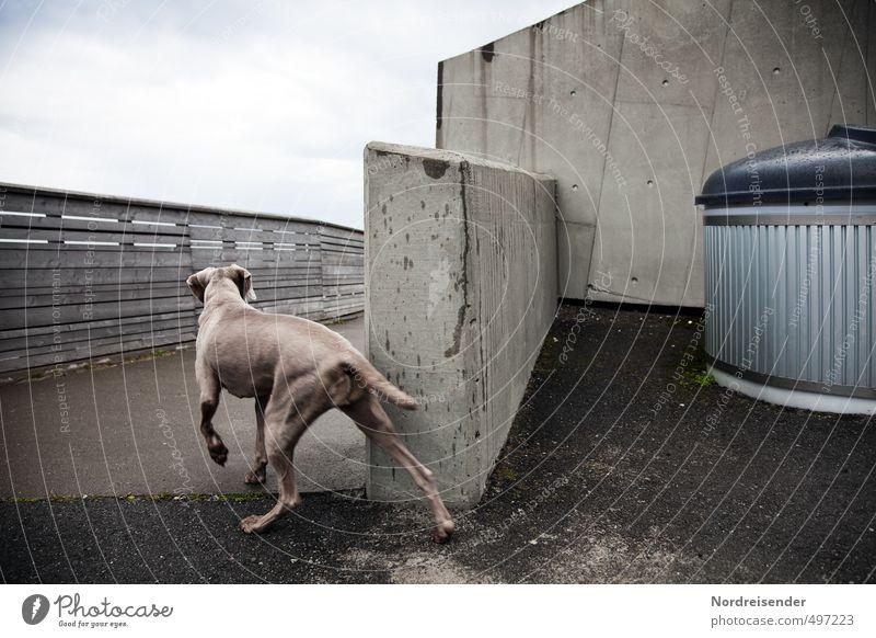 Tier l Spannung Hund Wand Wege & Pfade Mauer Architektur Holz Kraft elegant Beton ästhetisch beobachten Fußweg Bauwerk Mut Brückengeländer
