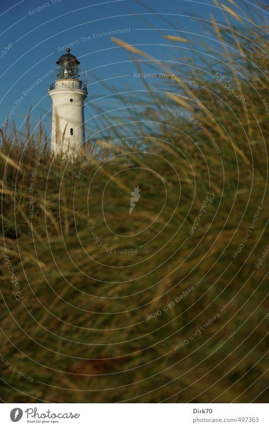 Hirtshals Fyr in den Dünen Ferien & Urlaub & Reisen Sommerurlaub Wolkenloser Himmel Schönes Wetter Pflanze Gras Strandhafer Dünengras Wiese Küste Nordsee