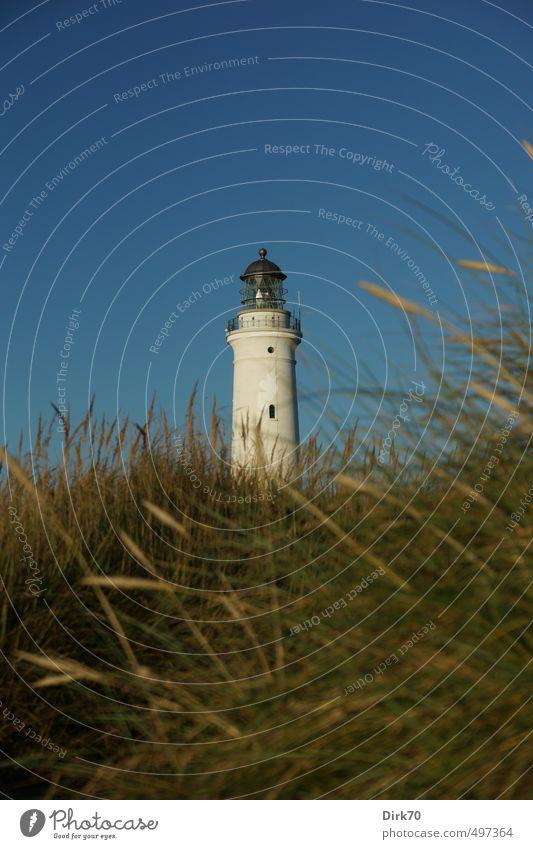 Leuchtturm von Hirtshals im Abendlicht Güterverkehr & Logistik Wolkenloser Himmel Sonnenlicht Sommer Schönes Wetter Gras Grünpflanze Strandhafer Dünengras