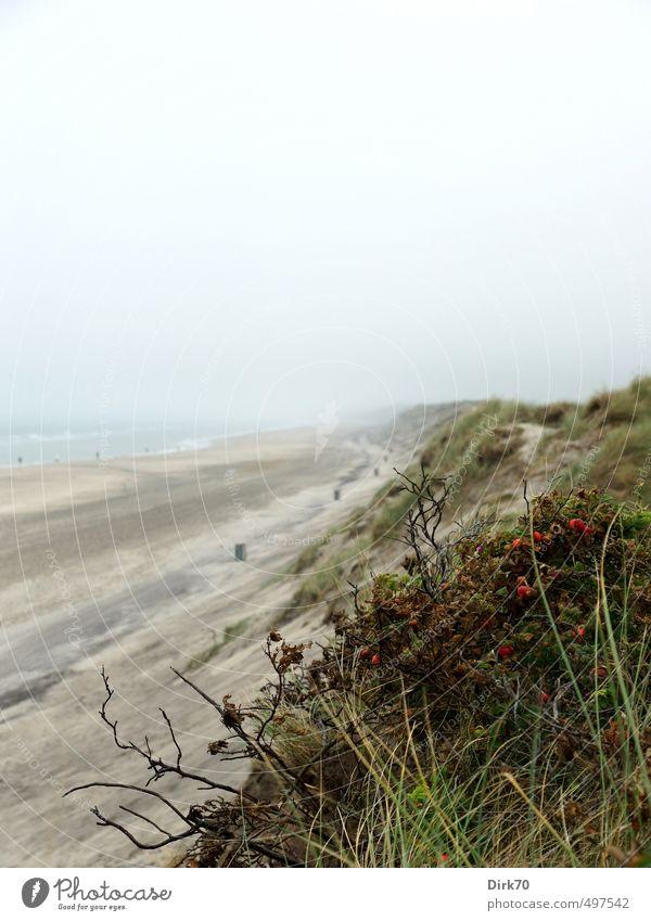 Weg in die Unendlichkeit Landschaft Sommer Wetter schlechtes Wetter Nebel Gras Sträucher Dünengras Hundsrose Hagebutten Küste Strand Nordsee Meer Skagerrak