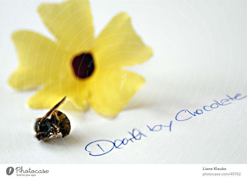 death by chocolate Natur weiß Blume gelb Tod Papier Insekt Typographie Wespen