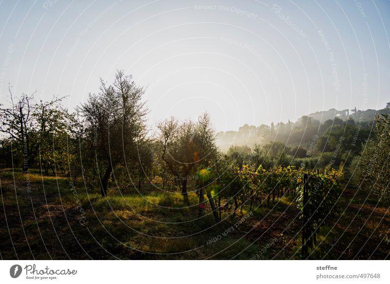 Around the World | Toskana around the world steffne fotoreise Ferien & Urlaub & Reisen Tourismus Erde Städtereise weltenbummler