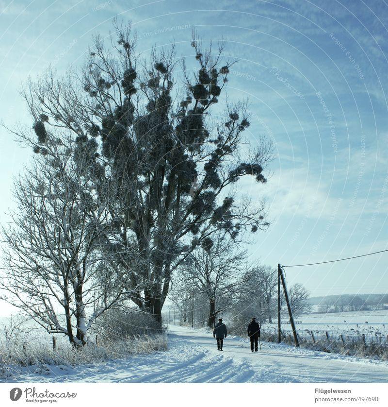 Winter des Lebens Ferne kalt Schnee Freiheit gehen wandern Perspektive laufen Ausflug Abenteuer Spaziergang Spazierweg frieren Schneelandschaft Dezember