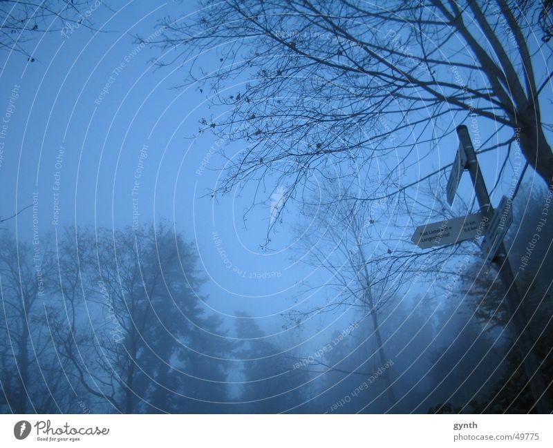 Wegweiser im Nebel Baum Herbst Trauer trüb Blatt kalt trist Märchen blau Natur spätherbst Traurigkeit Wege & Pfade Zauberei u. Magie Verhext Abend Morgen