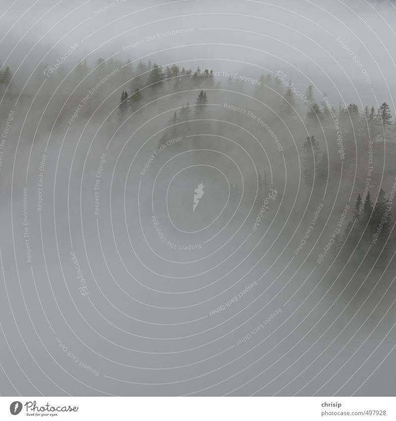 neblig Natur Pflanze Baum Erholung Landschaft Wolken Wald kalt Umwelt Nebel nass Hügel schlechtes Wetter