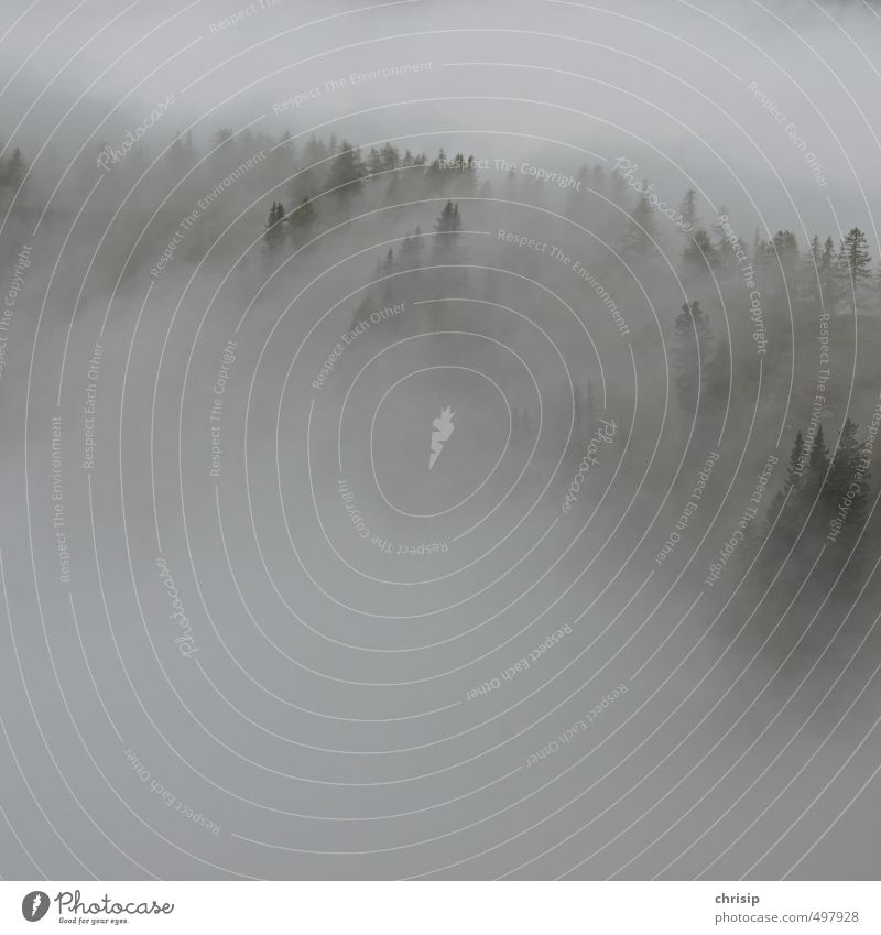 neblig Umwelt Natur Landschaft Wolken schlechtes Wetter Nebel Pflanze Baum Wald Hügel kalt nass Erholung Außenaufnahme Menschenleer Textfreiraum links
